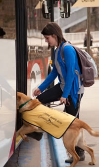 ramsey scholar sponsoring a guide dog in training